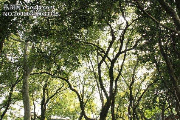 树丛景观设计手绘