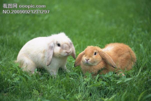 小动物宠物兔16