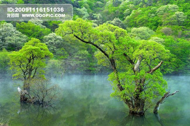 春夏秋冬_自然景观_摄影图设计素材下载; 森林风光; 水中的树