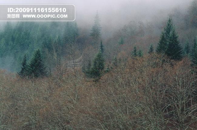 微信树林风景图片图像