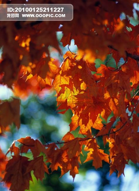 景色背景模板下载 秋天 景色  景色描写 景色背景图片下载 秋天 景色