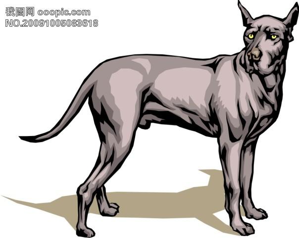 黑白写实动物手绘