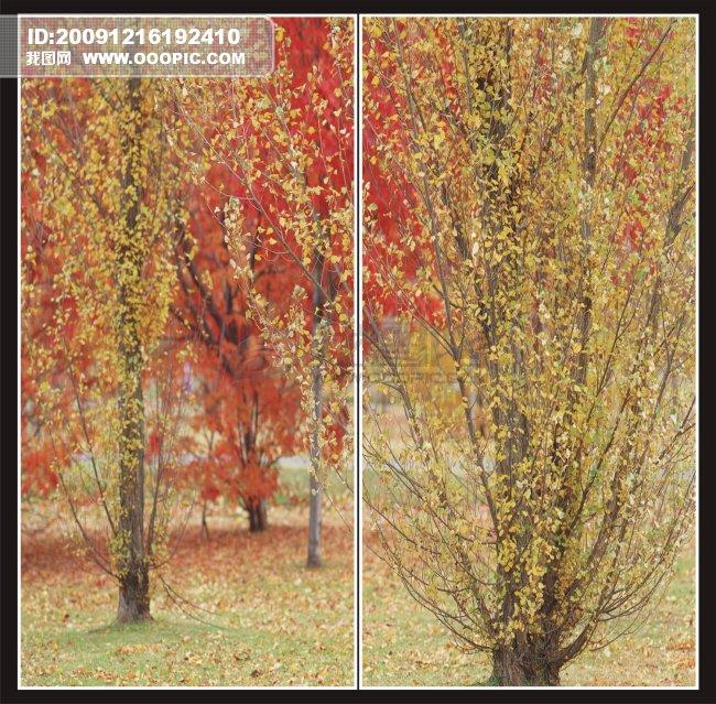 花草背景 枫叶 枫叶风景 移动门-红色枫树林 树叶 树叶底纹 秋天 秋季