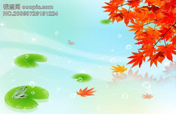 彩 红色枫叶 漂亮荷叶 青蛙