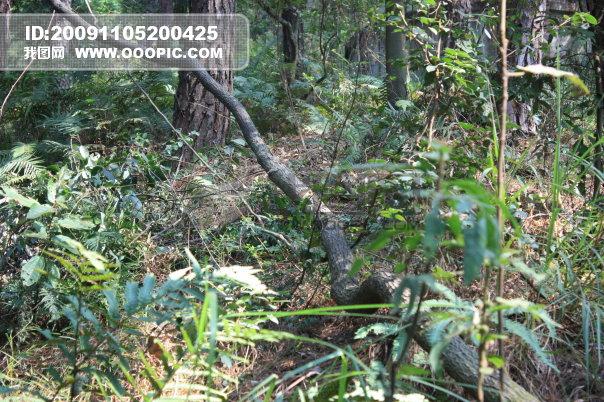 森林树木模板下载(图片编号:730406)