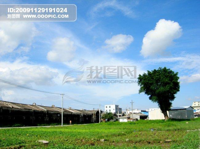 蓝天白云草地大树