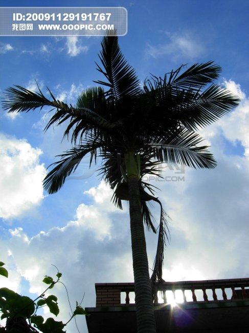 蓝天树木图片素材(图片编号:771213)