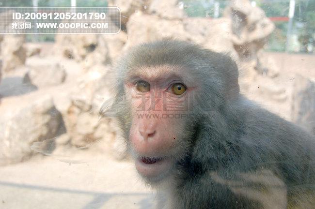 分享一组猴子可爱图片,一起欣赏在山上的猴子.    up.qqya.