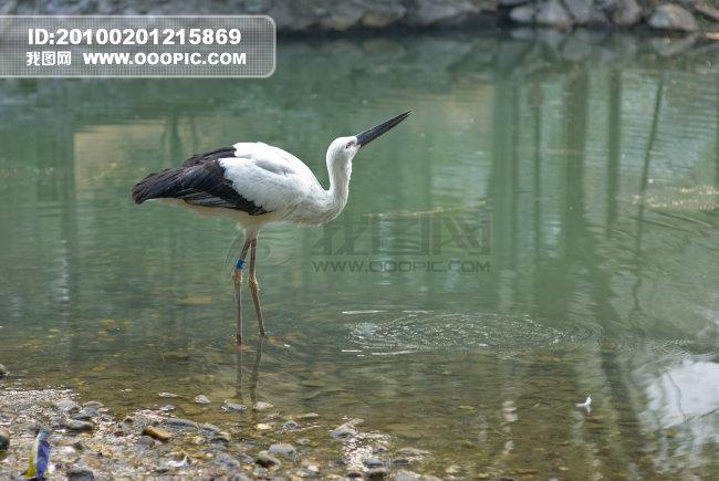 河滩鹤鸟图片素材(图片编号:862266)